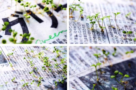 اختراع روزنامه سبز ژاپنی که به گیاه تبدیل می شود